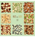 nuts and seeds set vector image vector image