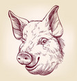 pig hand drawn llustration realistic sketch vector image