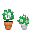 Two White Jasmine Flowers in Flower Pot vector image vector image