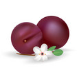 plums icon fresh and juicy fruit isolated vector image