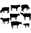 cows and calf bw vs vector image vector image