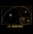 golden proportions ratio guidelines vector image vector image