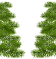 Green lush branch of spruce with the two sides vector image vector image
