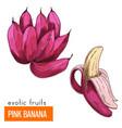 pink banana color vector image vector image