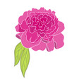 pink peony flower colored sketch peony graphic vector image vector image