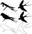 swallows collection - vector image vector image