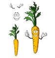 Fresh whole carrot vegetable vector image vector image