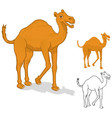 Camel Cartoon Character vector image