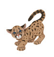 cougar cub in motion isolated vector image vector image