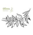 olives hand drawn set vector image