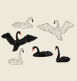 set of black and white swans hand drawn birds vector image vector image