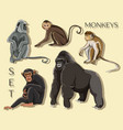 different types of monkeys vector image vector image