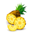 Pineapple isolated on white vector image vector image