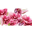 pink lily flowers watercolor summer floral vector image vector image