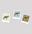 polaroid photo of german shepherd vector image vector image