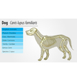 Canis lupus familiaris - skeleton vector image vector image