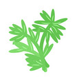 green plant template isolated on white background vector image