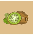 Kiwi in vintage style Colored vector image vector image