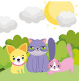 little puppy and cats sun sky outside pets vector image vector image