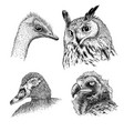 realistic heads of wild birds vector image