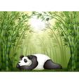 a panda sleeping between bamboo trees vector image