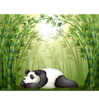 A panda sleeping between the bamboo trees vector image vector image