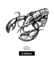 Hand drawn sketch seafood black and white vintage vector image vector image