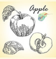 collection of highly detailed hand drawn apples vector image vector image