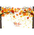 maple fall trees vector image vector image
