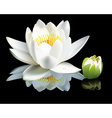 waterlily flower vector image vector image
