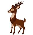 Cute deer cartoon vector image