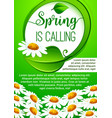 spring holidays floral banner with daisy flowers vector image vector image