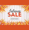 autumn sale shop now promo template vector image