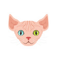cute sphinx cat with eyes of different colors vector image vector image
