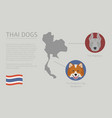 dogs by country of origin thai dog breeds vector image