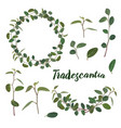 twigs and leaves of the tradiscation in a wreath vector image vector image