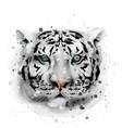 white tiger watercolor wildlife annimal vector image vector image
