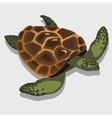 Turtle in a cartoon style closeup vector image