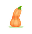 flat icon of butternut squash orange bell vector image vector image