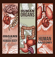 human organs sketch anatomy poster vector image vector image