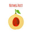 nutmeg fruit food cartoon flat style vector image vector image