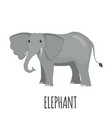 cute elephant in flat style vector image