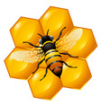 bee on a part of honeycomb vector image vector image