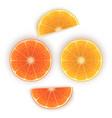 bright set colorful half slices orange vector image vector image