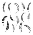 set simple wheats ears icons and wheat logo vector image