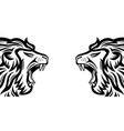 two angry roaring lions vector image