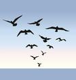 bird flock flying over blue sky background animal vector image
