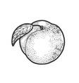 peach fruit sketch vector image vector image