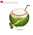 Coconut Water Drink A Famous Beverage in Maldives vector image vector image