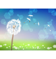 Dandelion in a Meadow vector image
